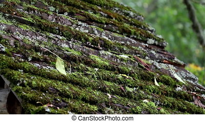 Moss has grown on top of the wooden roof
