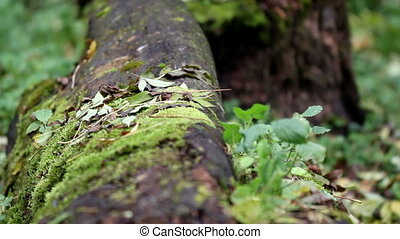 Tree trunk on the ground and has grown some moss and grass...