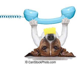 dog telephone - dog holding a telephone and a note lying...