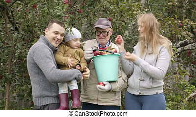 Family out collecting apples in the orchard with a young...