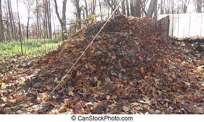 compost leaves heaps - compost heaps old withered leaves...