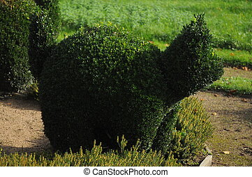 Buxus sempervirens - These is one of the common box...