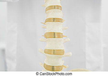 Spine isolated over white background - Close-up of a spine...