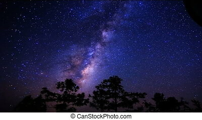 stars turning trees.