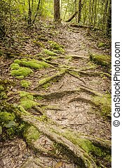 Ecological nature trail. - Ecological nature trail in a...