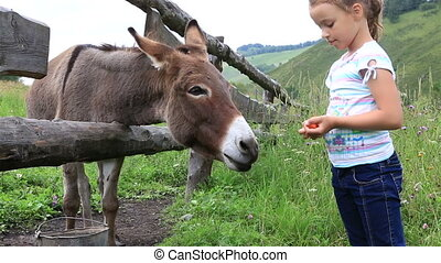 Little girl feeding a donkey