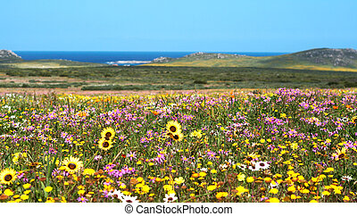 Field of colorful wild flowers