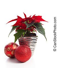 Special Christmas plant Poinsettia and red balls over white...