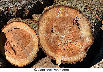 Tree wood stump cross section - Tree wood log stump cross...