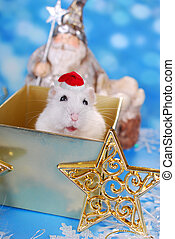 christmas day, at last - happy white hamster with santa hat...