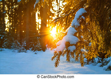 winter landscape with the forest and sunset - beautiful...