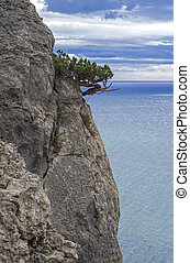 Juniper tree on a cliff above the sea.