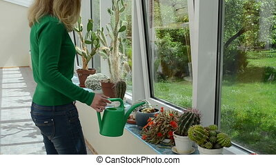 cactus watering girl - Various cactus plants grow in...