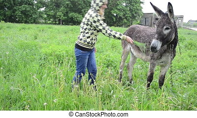 farmer woman donkey feed - Farmer woman feed cute donkey...