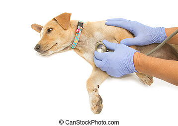 Examinar, perrito, Veterinario, mano