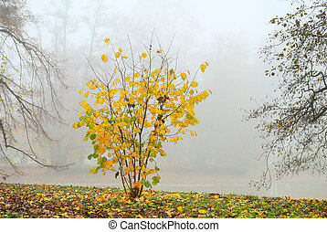 Small shrub with yellow leaves in misty autumn morning