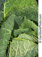 Savoy (closeup shot) - Fresh Savoy macro shot from top