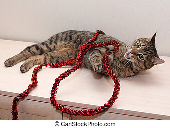 Tabby cat playing with red Christmas tree garland, his...