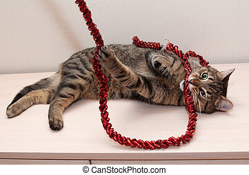 Tabby cat plays gnaws red Christmas garland on white wall