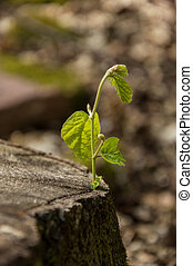 Small plant growing on a cut tree with blurred background