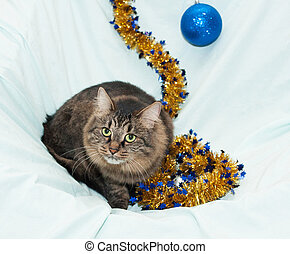 Striped fluffy Siberian cat sitting on background of golden...