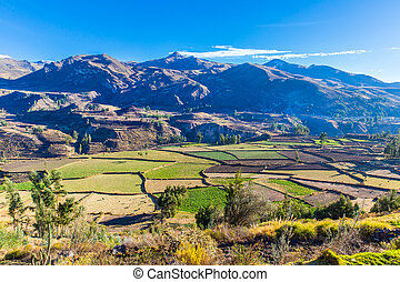 Colca Canyon, Peru,South America. Incas to build Farming...