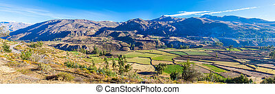 Panorama of Colca Canyon, Peru,South America. Incas to build...