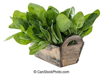 espinafre, folhas, isolado, branca