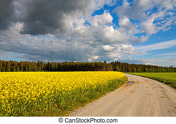 Country road and rapeseed field - Rural road with yellow...
