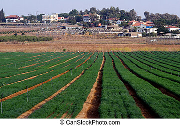 Moshav in Israel - NORTHERN NEGEV, ISR - OCT 01:Agricultural...