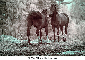 Horsy greeting - A picture of two horses meeting and saying...
