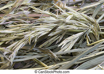 grass hay background - dried hay with a variety of grasses -...