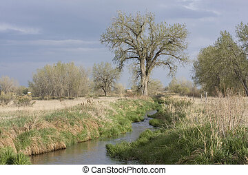 narrow irrigation ditch in springtime - narrow irrigation...