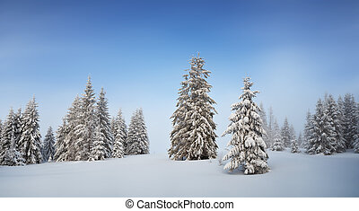 Winter panorama in the forest