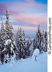 Evening in the winter forest - Winter landscape on a cold...