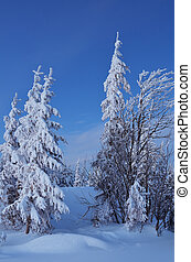 Twilight in the winter forest - Winter landscape in a...