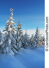 Fresh snow in the forest - Winter landscape with clean snow...