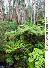 The Black Spur Foliage - Foliage at The Black Spur near...