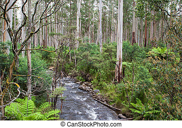 Watts Creek in the Black Spur - Foliage at The Black Spur...
