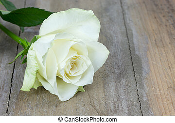 single white rose on a wooden surface