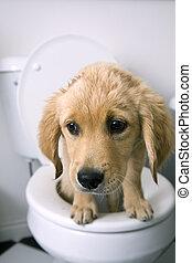 洗手間, 狗