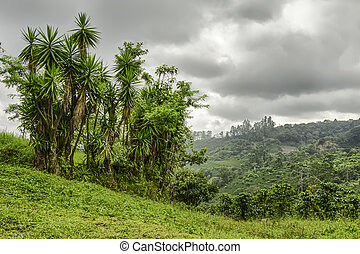 Costa Rica Landscape - Valley in Costa Rica with coffee...