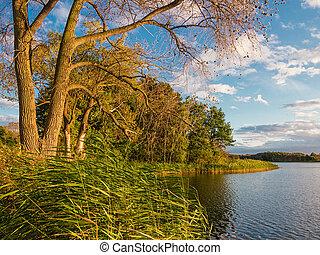 Landschaft mit Bäumen und See.
