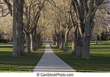 Allee, viejo, norteamericano, olmo, árboles, -, oval,...
