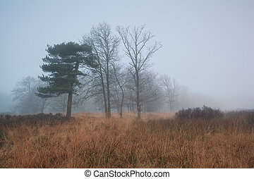 trees in dense fog - trees during late autumn in dense fog