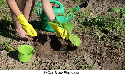 seedling water - girl in a wet pit planted seedling bury the...