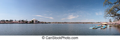 Panorama of Tidal basin with cherry blossoms - Expansive...