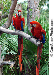 Parrots as Zoo in Florida.