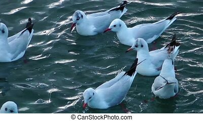 Seagulls on the Water