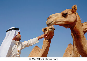 young Arab man with a camel in the desert
